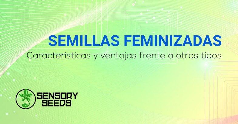 Semillas feminizadas caracteristicas