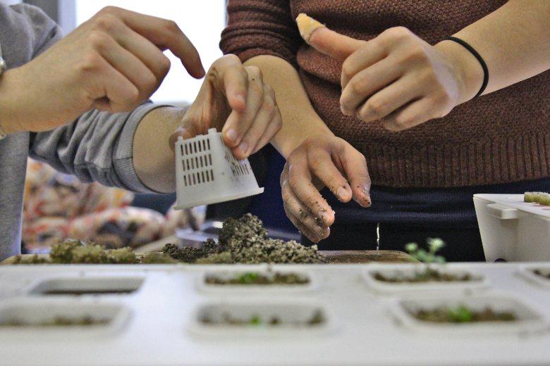 invernadero hidropónico y semillas de cannabis