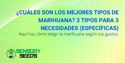¿Cuáles son los mejores tipos de marihuana? 3 tipos para 3 necesidades (específicas)