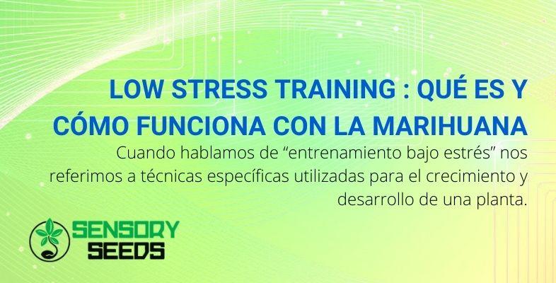 Low stress training qué es y cómo funciona con la marihuana