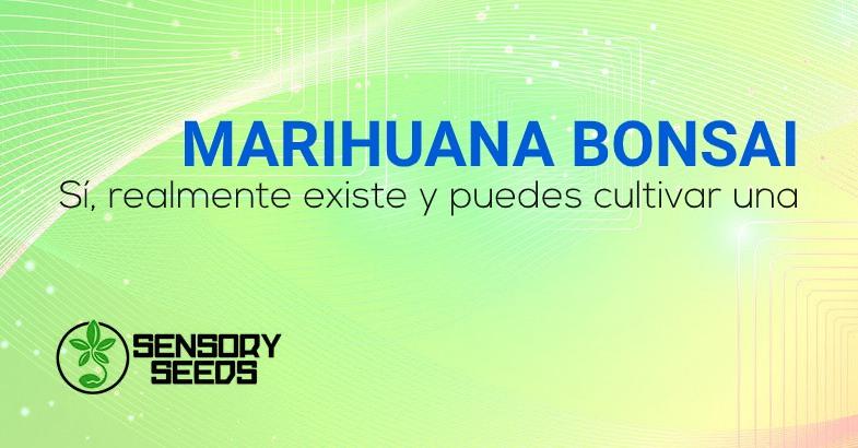MARIHUANA BONSAI y semillas de cannabis