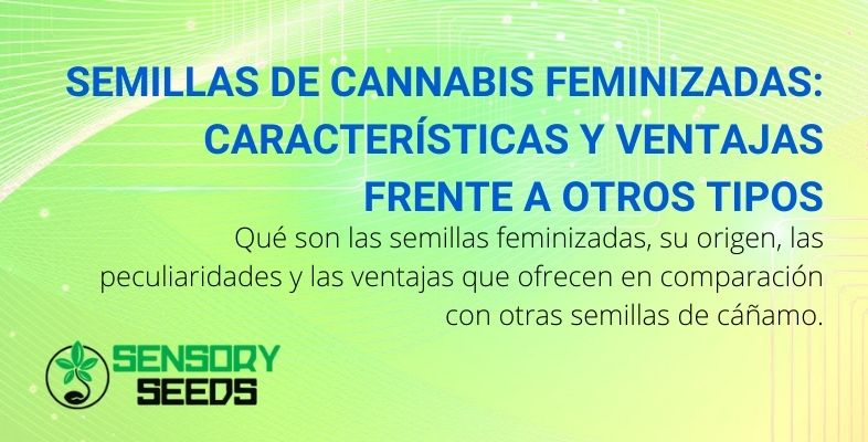 Semillas de cannabis feminizadas: características y ventajas frente a otros tipos