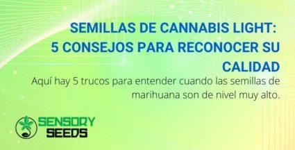 Semillas de cannabis light: 5 consejos para reconocer su calidad