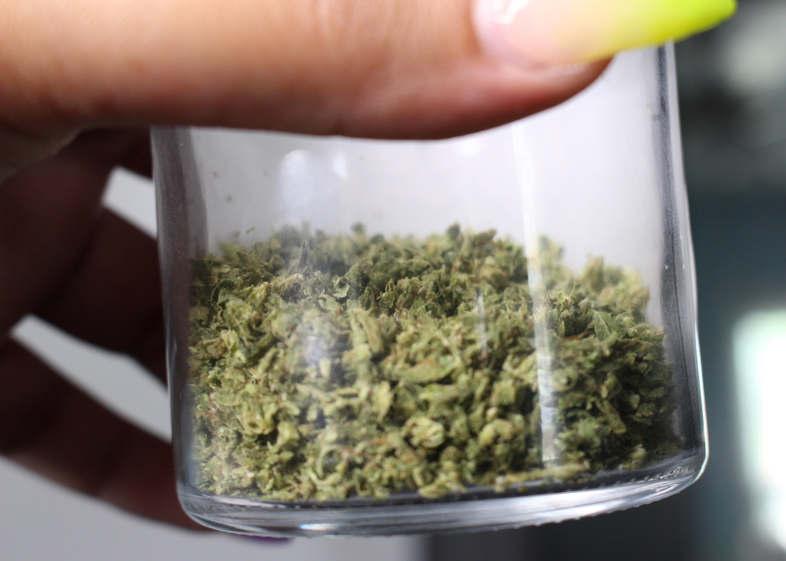 Top 5 de los mejores bancos de semillas de cannabis