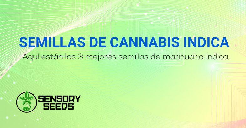 mejores semillas de cannabis Indica