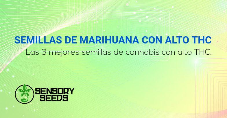 mejores semillas de marihuana con alto contenido de THC