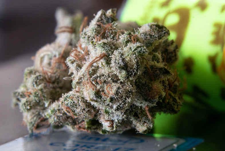 Vender semillas de cannabis