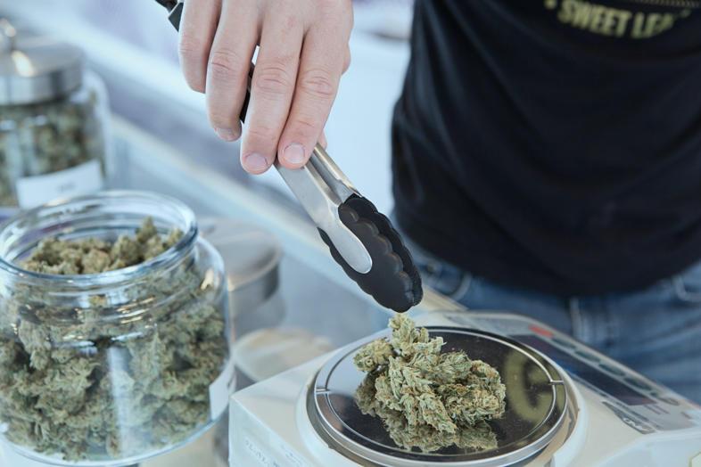 pesaje de semillas de cannabis