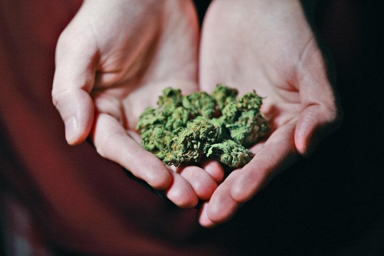 semillas de cannabis en las manos