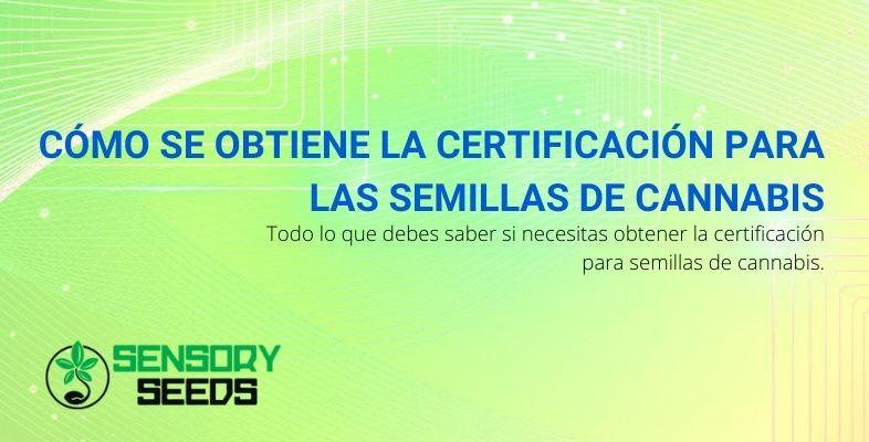 Cómo se obtiene la certificación para las semillas de cannabis