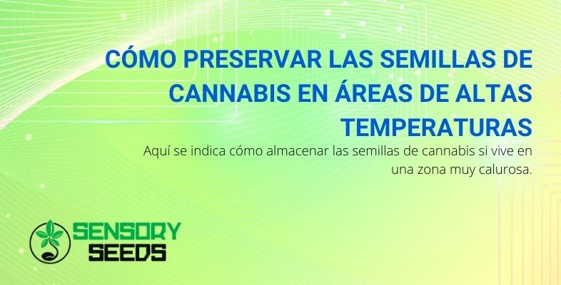 Cómo preservar las semillas de cannabis en áreas de altas temperaturas