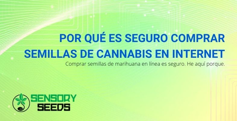 Por qué es seguro comprar semillas de cannabis en Internet
