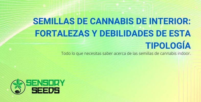 Semillas de cannabis de interior: fortalezas y debilidades de esta tipología
