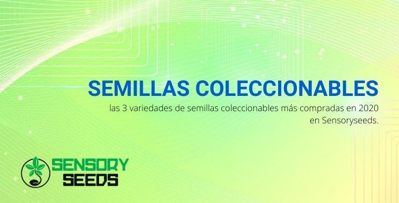 Semillas coleccionables: las 3 variedades de semillas coleccionables más compradas en 2020 en Sensoryseeds.