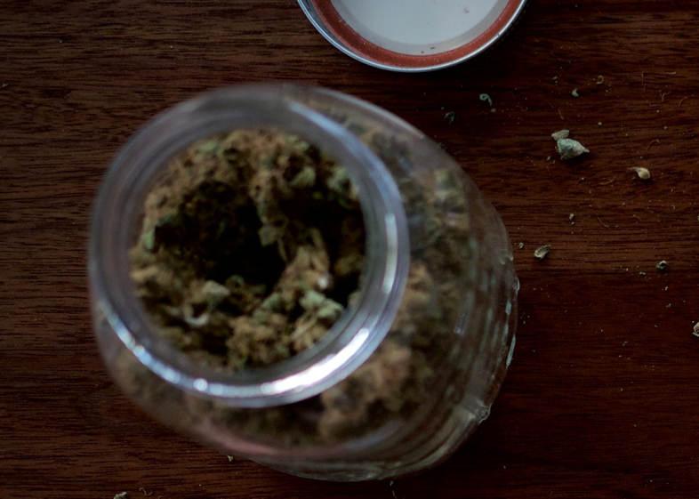 lata de semillas de cannabis