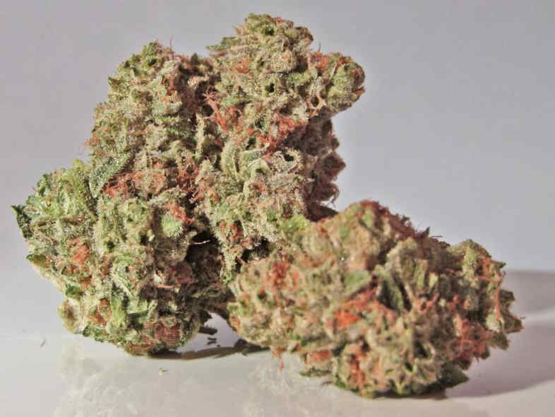 tricomas lechosos en la flor de marihuana