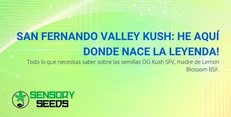 an Fernando Valley OG Kush.
