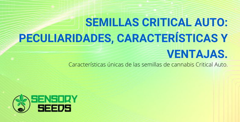 Semillas Critical Auto.