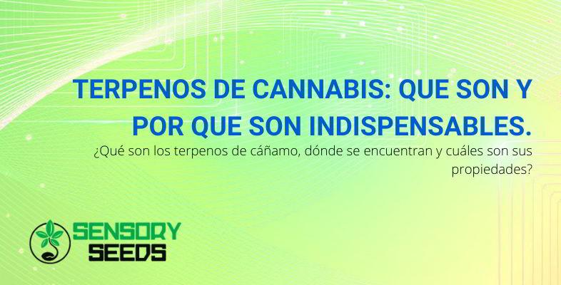 Terpenos de cannabis.