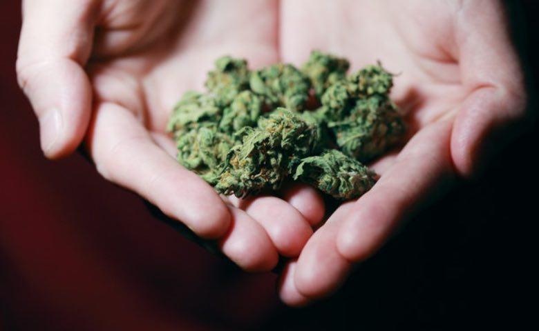 Cannabis Amnesia Haze y flores.
