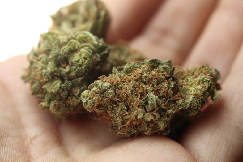 Una de las mejores variedades de cannabis del mundo: Amnesia