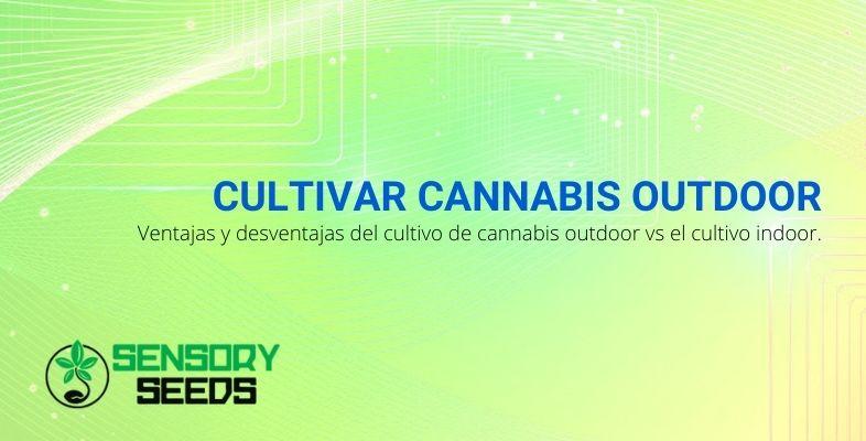 Ventajas y desventajas de cultivar cannabis al aire libre