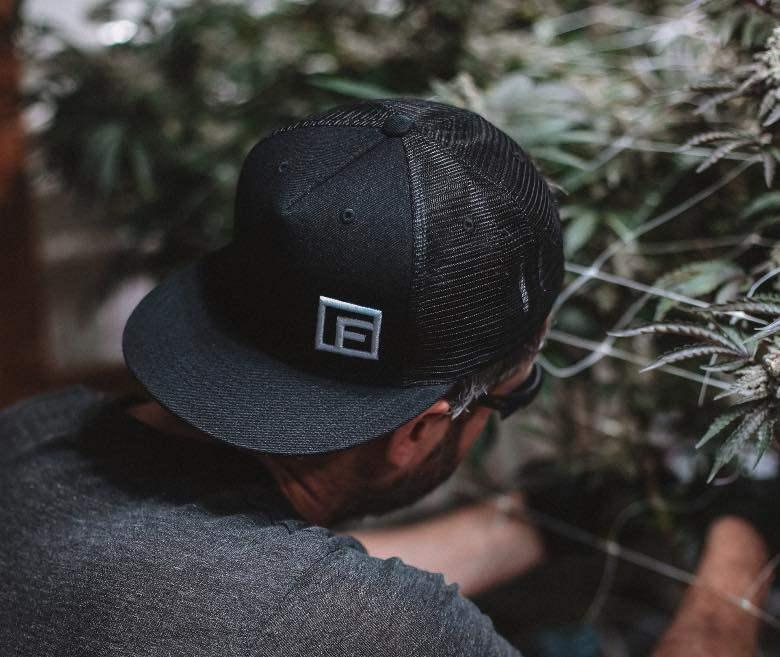 cuándo-enjuagar-las-raíces-de-cannabis