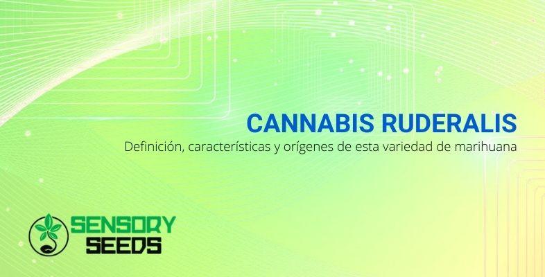 Marihuana Ruderalis: la definición, características y orígenes de esta variedad de cannabis