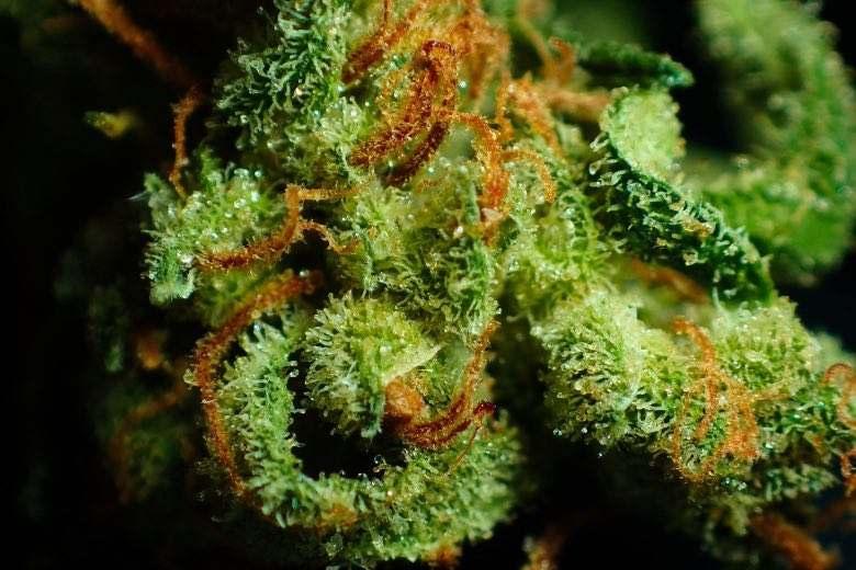 ¿Qué es la resina de marihuana?