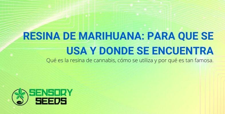 Que es y para que usos la resina de marihuana