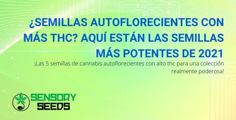 En 2021 las 5 semillas autoflorecientes con un alto contenido de THC