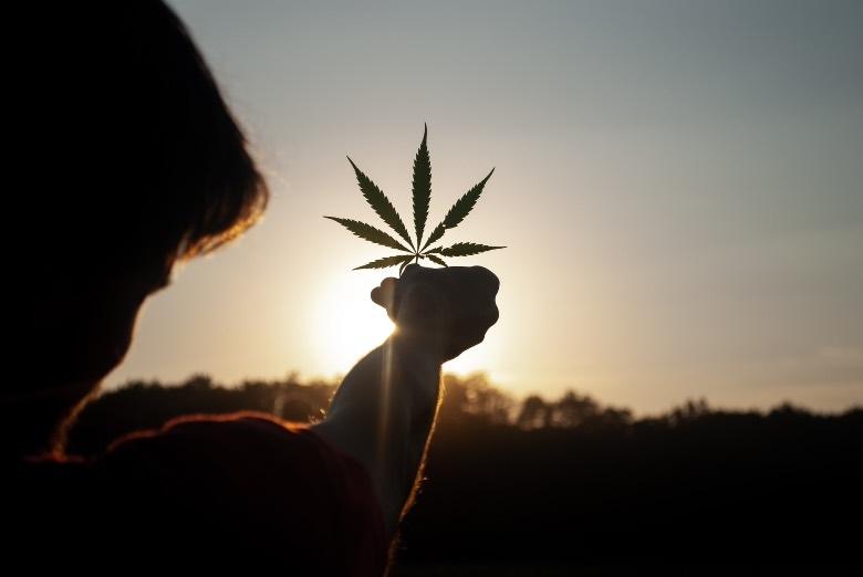 Cannabis: todos los beneficios terapéuticos
