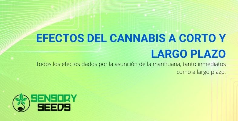 Todos los efectos del cannabis a corto y largo plazo