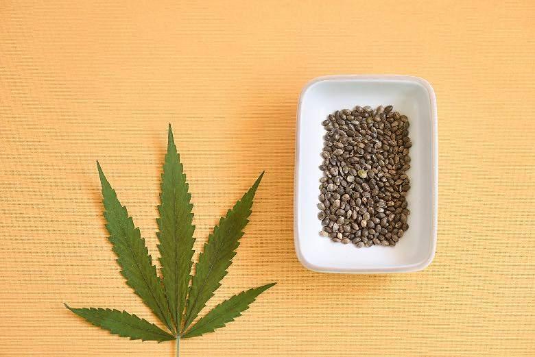 Semillas de marihuana autoflorecientes de forma ovoide