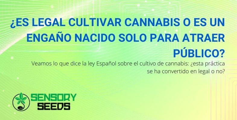 ¿Es legal cultivar cannabis o no?
