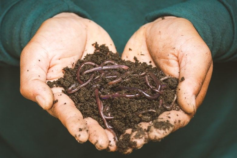Vermicompost (humus de lombriz)