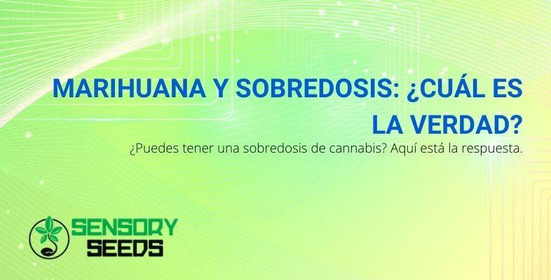 La verdad sobre la sobredosis de marihuana