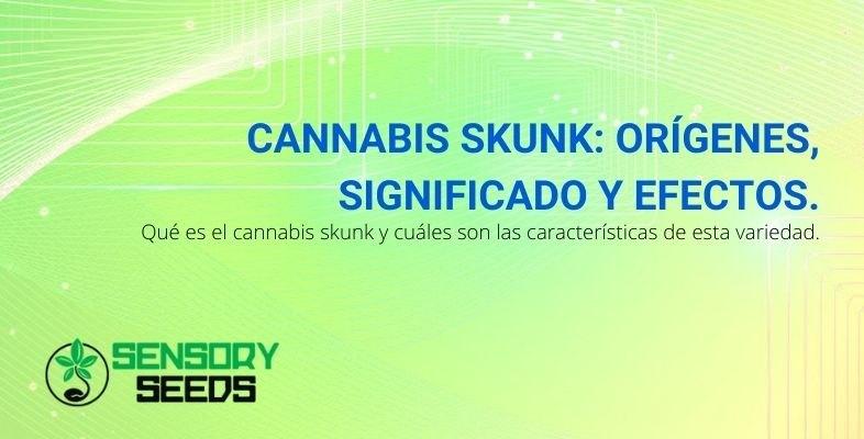 Los orígenes, significado y efectos del cannabis Skunk