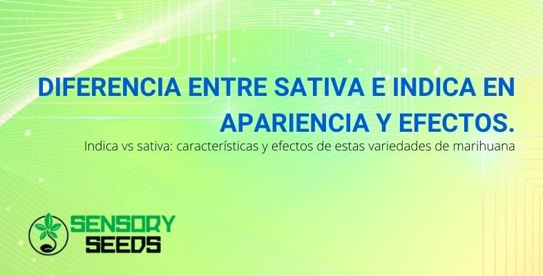 Todas las diferencias entre el cannabis Sativa e Indica