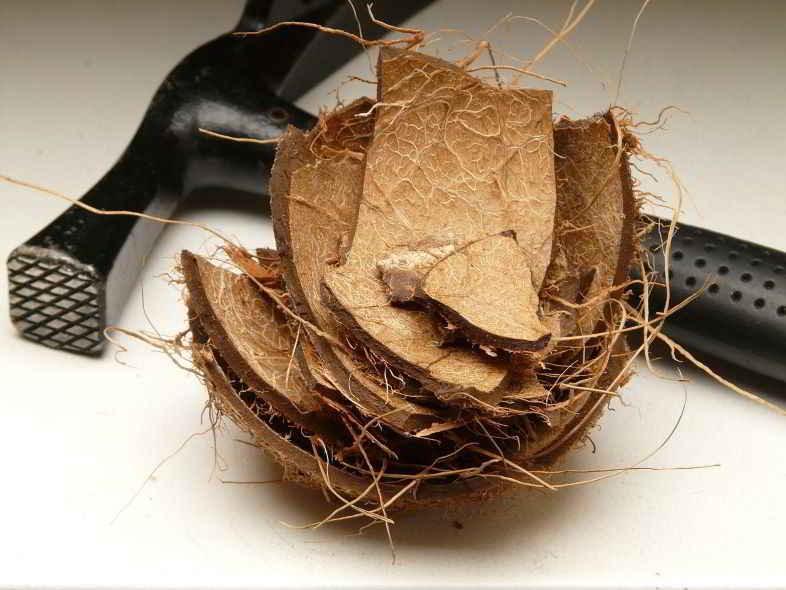 ¿Qué es la fibra de coco?