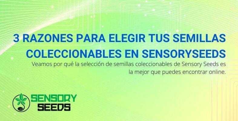 3 razones para elegir Sensoryseeds para sus semillas coleccionables