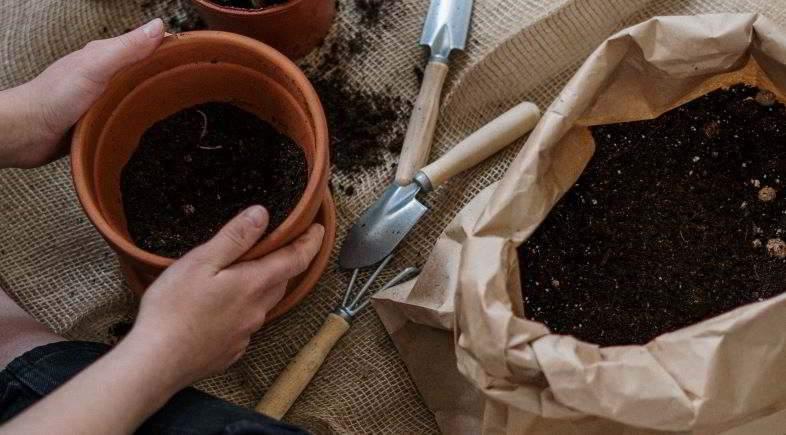 Cómo trasplantar una planta correctamente.