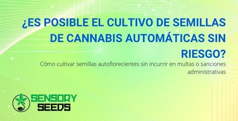 ¿Cómo se pueden cultivar semillas de cannabis autoflorecientes sin correr el riesgo de sufrir penalizaciones?