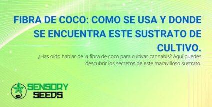 La fibra de coco en el cultivo de cannabis