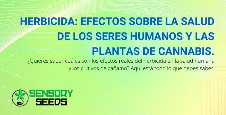 Los efectos del herbicida en humanos y plantas de cannabis.
