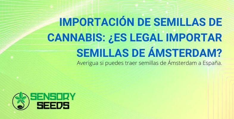 ¿Se pueden importar semillas de cannabis de Ámsterdam a España?