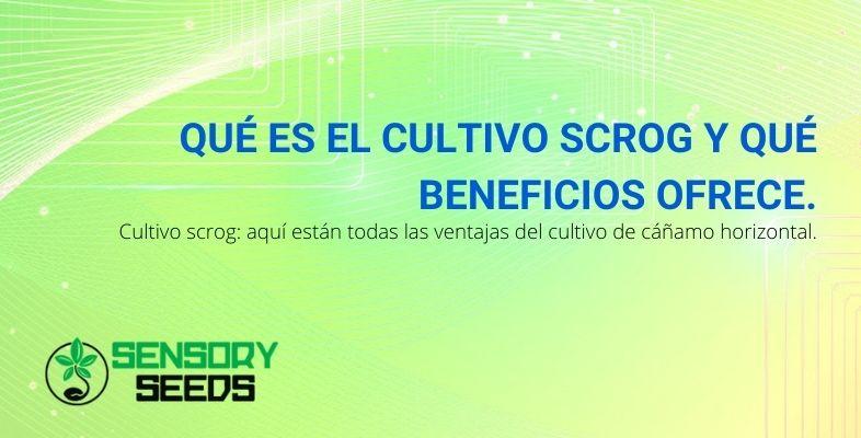 ¿Qué es y cuáles son las ventajas del cultivo horizontal scrOG?