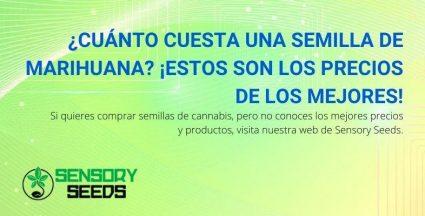 Los precios de las mejores semillas de marihuana en Sensoy Seeds