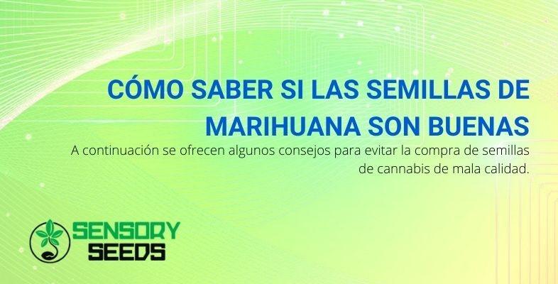 Conoce la calidad de las semillas de marihuana